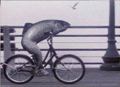 A_Fish_Needs_a_Bicycle