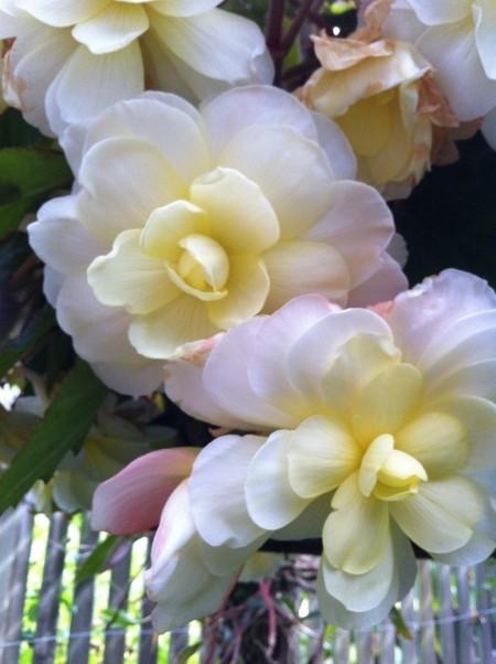 rose-garden-3